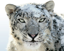 Apple Snow Leopard